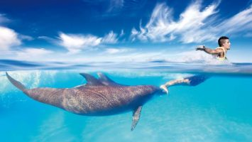 swimming-with-dolphins-in-cancun